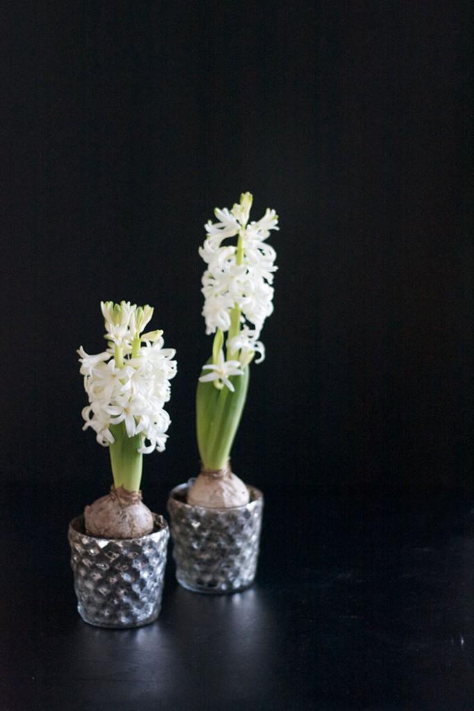 Geschenk zum Mitbringen in der Weihnachtszeit - erste Frühlingsboten Hyazinthen - lindaloves.de DIY & Deco